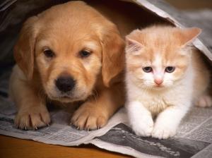 Puppy - Kitten